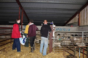 Accredited Training Programmes At Gortilea Social Farm